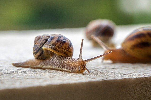 Langzaam slakken